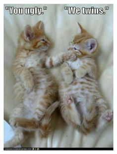 Funny Cats : 16 Funny Cat Photos with Caption<<<Fred and George Weasly. Humor Animal, Funny Animal Jokes, Funny Cat Memes, Animal Quotes, Cute Funny Animals, Funny Cute, Cute Cats, Kittens Cutest, Funny Kittens