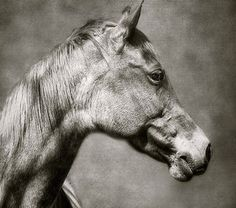 Beautiful horse photography - noble