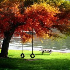 autumn, bench, bronze, brown, calm