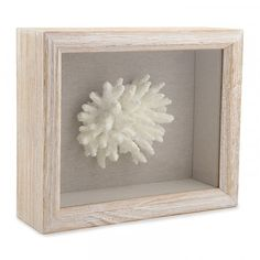 Shadow Box Coral Fingers Front