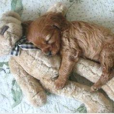 everybody needs a teddybear