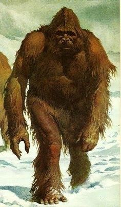 BigFoot Sightings from Around the Worls, Sasquatch, Yowi, Abonimable Snowman, All Sightings of Large Humanlike Creatures Yeti Pictures, Bigfoot Pictures, Yeti Bigfoot, Bigfoot Sasquatch, Bigfoot Toys, Fantasy Creatures, Mythical Creatures, King Kong, Bigfoot Documentary