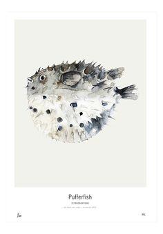 My Deer Art Shop- Pufferfish Poster – Bloesem Class