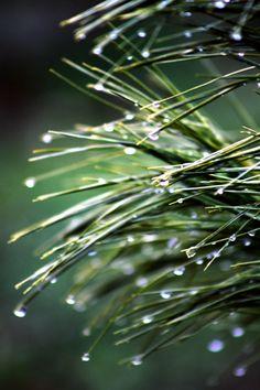 December rain -