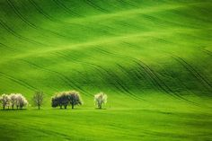 Places that look fake but are very, very real   Moravia, Czech Republic: The gorgeous undulating green hills here look like waves of yarns carpeting a vast floor. A rare sight totally worth your desktop wallpaper.