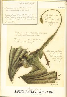 Long Tailed Wyvern (Spiderwick Field Guide) Like the Wyverns that attacked Kendra, Bracken, Raxtus, Mark, and Tux on the beach in Keys to The Demon Prison Mythical Creatures Art, Mythological Creatures, Magical Creatures, Collage Des Photos, Spiderwick, Legends And Myths, Field Guide, Dragon Art, Book Of Shadows