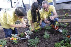 How to Start a Community Garden : HGTV Gardens Vegetable Gardening, Gardening Tips, Diy Network, Permaculture, Hgtv, Conservation, Sustainability, Articles, Gardens
