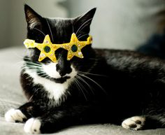 Star-Shaped Cat Glasses / 19 Adorable Pets Trying To Sell You Something On Etsy (via BuzzFeed Community)