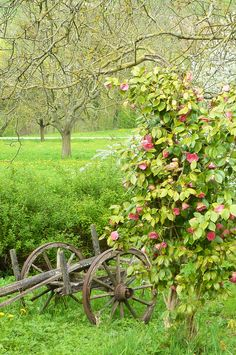 Nature Composting Country Living ~ lovely orchard and a great spot for some beehives Country Charm, Country Life, Country Living, Country Roads, Foto Nature, Bouquet Champetre, Everything Country, Country Landscaping, Country Scenes