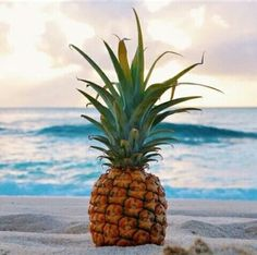 Ananas on the beach . Ananas am Strand.