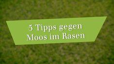 Moos dauerhaft entfernen: So wird Ihr Rasen wieder schön