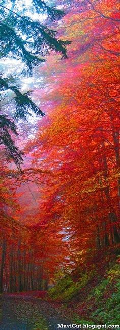 Autumn splendor, Saxony, Germany