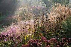 Good morning Garden | Flickr - Photo Sharing!