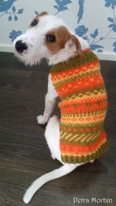 Knitted Hats, Crochet Hats, Joko, Animals And Pets, Dachshund, Colours, Knitting, Luigi, Yarns