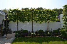 Wellness im Garten – Back Yard Plants Garden Cottage, Garden Pots, Garden Fences, White Clematis, Small Terrace, Landscaping Trees, Modern Garden Design, Back Gardens, Hedges