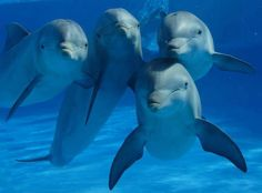Cute #Dolphins