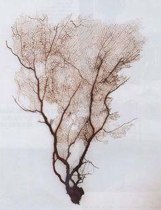 Ω Sea fan coral Patterns In Nature, Textures Patterns, Nature Pattern, Natural World, Natural History, Sea Creatures, Illustration, Decoration, Drawings