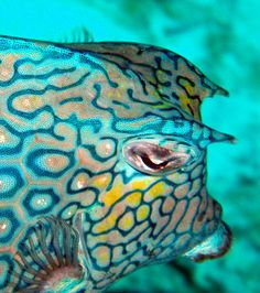 Picasa Web Albums - Michael Nord - Bonaire - May. Underwater Creatures, Underwater Life, Ocean Creatures, Beautiful Sea Creatures, Animals Beautiful, Sea And Ocean, Fish Ocean, Life Under The Sea, Salt Water Fish