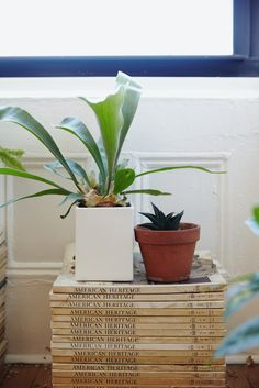 The Staghorn Fern, a currently trending houseplant, is characterized by the ASPCA as non-toxic and pet-friendly. It can be potted in a planter, or hung against the wall on a slatted wood mount. It's large, graceful fronds make it a real show stopper for a living space. It thrives in bright-to-moderate light conditions and a moist environment. Water regularly. - The Sill, thesill.com