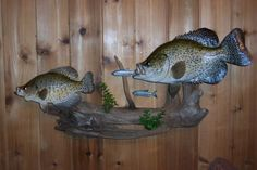 Awesome Fish Mount Table It S A Glass Living Room Coffee
