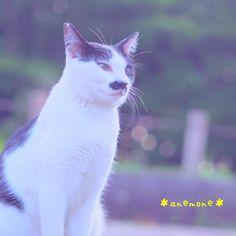 #cat #neko #猫#ねこ#ネコ #野良猫