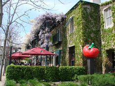 Our neighbor, Pizzeria Tra Vigne, has a wonderful outdoor patio in the spring and summer months. Notice the wisteria on balconies!