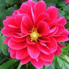 mexico national flower dahlia - Google Search