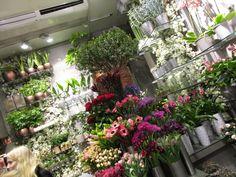 Fine fargerike blomster