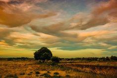 Photo Walltreebridge by Tea Ser on 500px