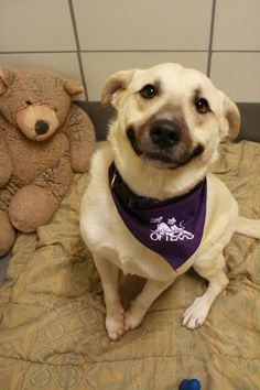 Saturday's Cuteness: Teddy Bears Make Shelter Dogs Smile!