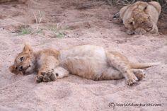 #Landscapes  #Animals #KrugerNationalPark #Kruger #KrugerNP #SouthAfrica #Safari #Travel