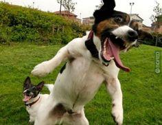 HappyHappyHappy Puppy via www.bored.com