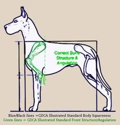 Great Dane Standard Great Dane Fawn, Facts, Illustration, Dogs, Great Danes, Pet Dogs, Doggies, Illustrations