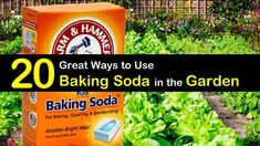 Find out how to best use baking soda in the garden and for your plants. Sprinkled over vegetables and plants, baking soda is a great natural remedy for pest control. Includes a variety of worm, gnats and ants repellent recipes. tips baking soda Slugs In Garden, Garden Pests, Garden Insects, Ants In Garden, Baking Soda Cleaning, Baking Soda Uses, Organic Gardening, Gardening Tips, Fairy Gardening