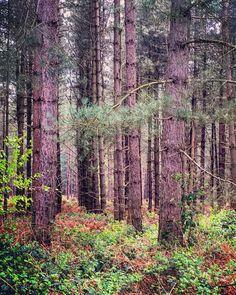 jamsgram76 | Rendlesham Forest