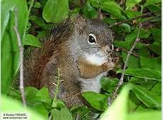 Bird Feeders, Photos, Owl, Outdoor Decor, Image, Squirrels, Nature, Animaux, Laughing