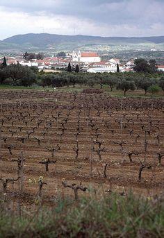 View to Vila de Frades, vineyard Alentejo Portugal