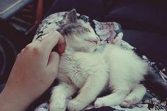 freja, via Flickr.