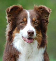 Pretty dog - very alert too!