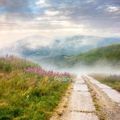 wild flowers on the hillside at sunrise Purple Flowers, Wild Flowers, Image Search Engine, Wild Grass, My Photos, Stock Photos, Summer Landscape, Art Images, Royalty Free Photos