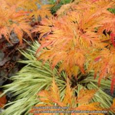 Grasses make your garden come alive with color and texture!