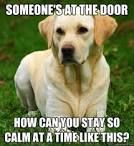 Funny Animal Pictures, Funny Animals, Cute Animals, Funniest Pictures, Funny Photos, Funny Images, Funny Dog Memes, Funny Dogs, Dog Humor