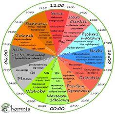 Zegar aktywności narządów wg Tradycyjnej Medycyny Chińskiej – Homnis