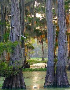 """bonitavista: """" Caddo Lake, Louisianna photo via igor """" I live 40 minutes from here."""