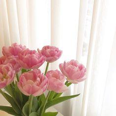 My Flower, Pink Flowers, Beautiful Flowers, Flower Aesthetic, Pink Aesthetic, No Rain, Slytherin, Planting Flowers, Creations