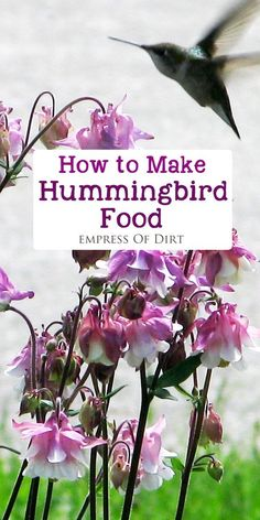 Attract hummingbirds to your garden with the right plants and food sources. It's important to use the right recipe for sugar water nectar (similar to the nectar found in many flowers) so the hummingbirds get the nutrition they need. These easy step-by-step instructions will get you started. #sponsored