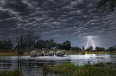 elephant crossing - World Photography Organisation