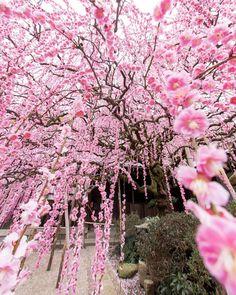 Cute Crafts, Dandelion, Paradise, Flowers, Plants, Craft Ideas, Instagram, Dandelions, Plant