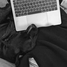 Home office goals | couch time, staffy, creative workspace, writing space, couch time