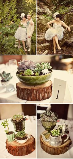 succulent and wood slice! different materials. YES.